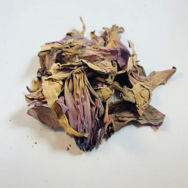 Dried Pink Sacred Lotus Flower Nelumbo Nucifera